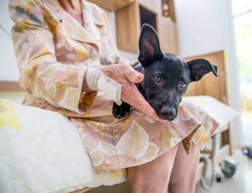 Aged care should embrace pets, says new study showing they can help prevent suicide among older Australians