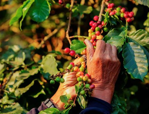 Why we should consider being 'conscious coffee consumers': Reflecting on our favourite brew